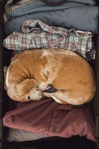 Поиск гостиниц, подходящих для размещения с домашними животными